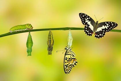 Mut zur Veränderung - jetzt bin ich dran