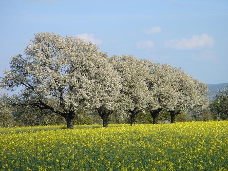 Outdoor Coaching - Frühlings-Erwachen: Die Kraft des Frühlings spüren, wenn alles erblüht