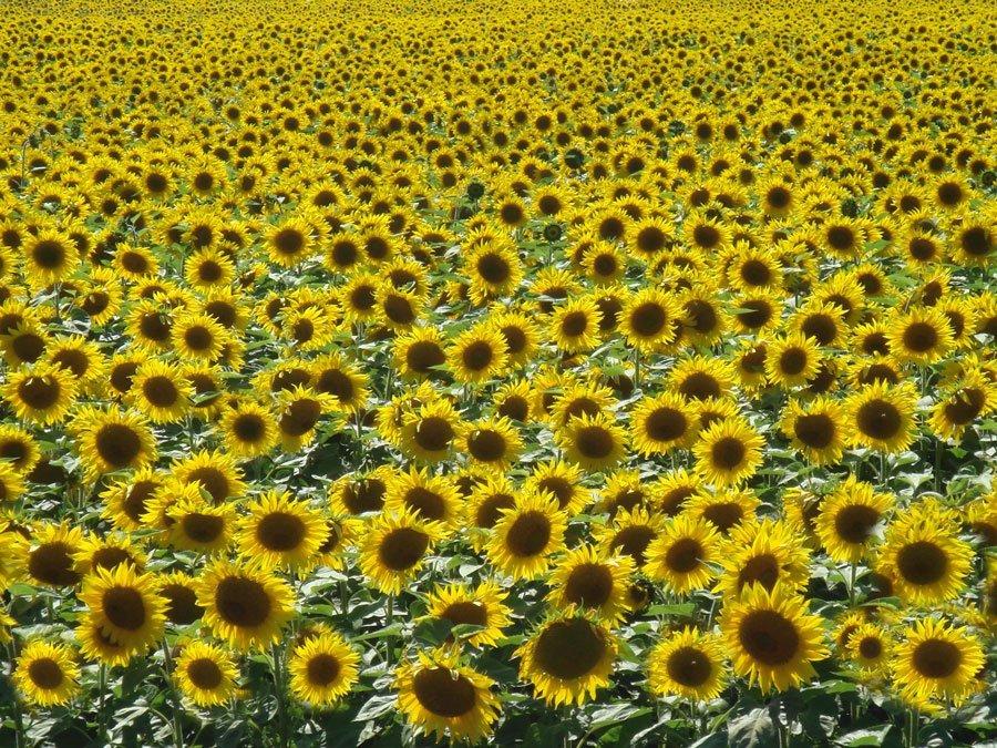 Outdoor Coaching Sommer Sonnenblumen Fülle
